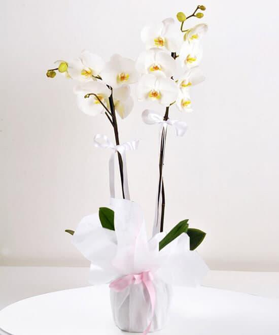 açilir liste çiçekler